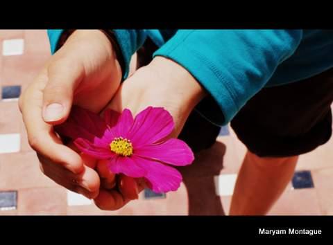 Flower for Chris