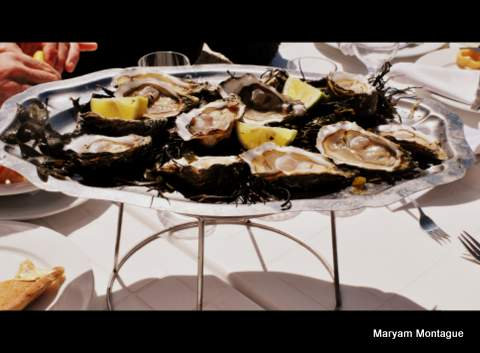 Oysters in Oualidia