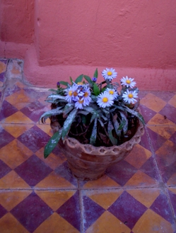 W_potted_flowers_f_2