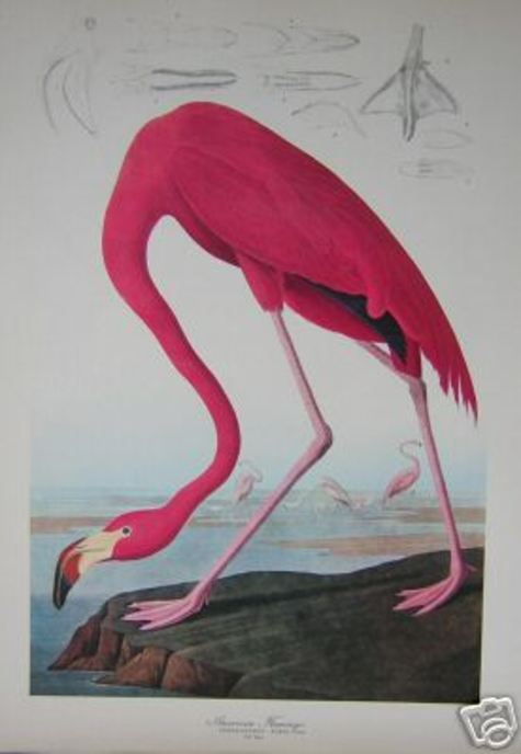 My_flamingo
