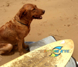 Surfer_dog_5